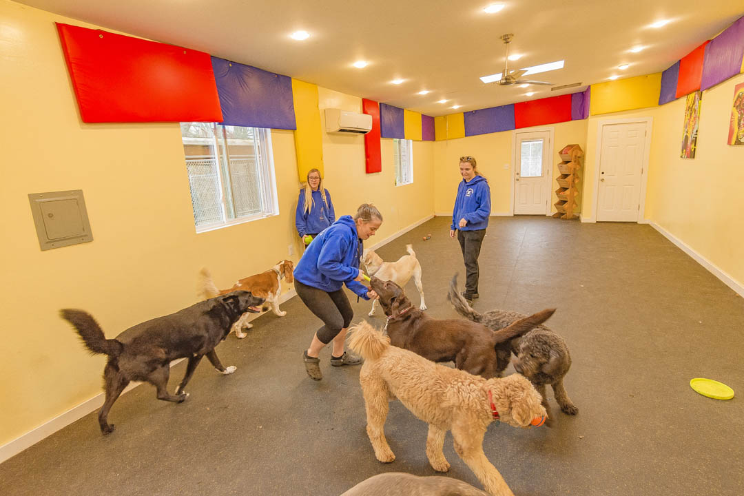 Countryside Kennels, Dog Boarding, Dog Daycare | Owings, MD